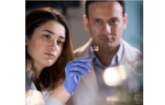 Ces chercheurs ingénieurs et chimistes de l'Université McMaster présentent un patch transparent capable de détecter les menaces alimentaires.