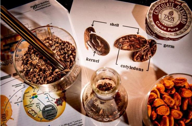 Les phénols présents dans les coques de fèves de cacao pourraient inverser les effets cellulaires néfastes de l'obésité.